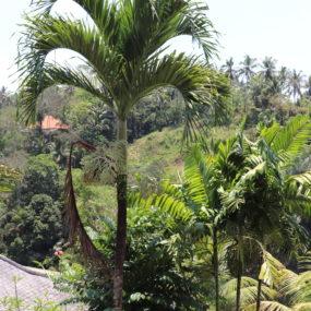 approaching ubud & serenity
